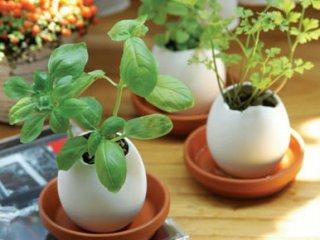 eggling - Crack & Grow